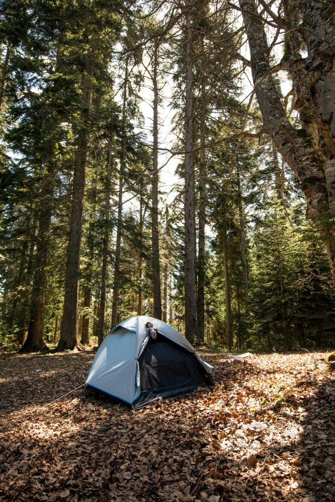 Tent with open front in woodland